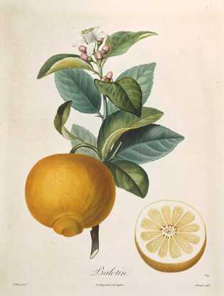 Горький апельсин устраняет сексуальную нероли получают методом холодного